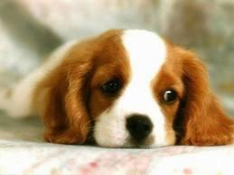 dog image 1