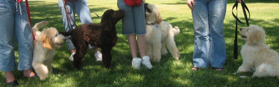 Dog Training and Education